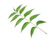 leaf-pattern-1190955-1280x960 copy